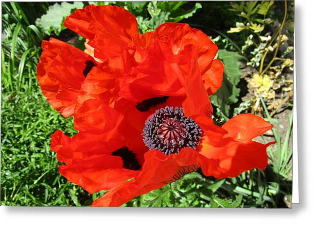 Capsule Greeting Cards - Remembrance Greeting Card by Rosita Larsson