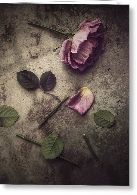 Remnants Greeting Card by Amy Weiss
