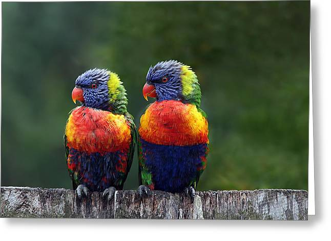 Rainbow Greeting Cards - Rendezvous in the Rain Greeting Card by Lesley Smitheringale