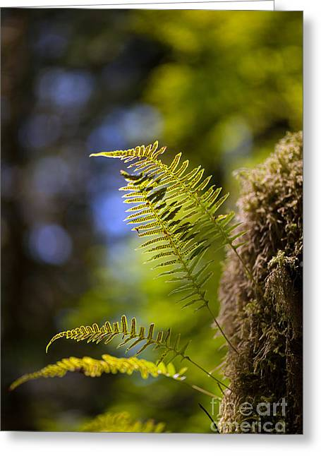 Frond Greeting Cards - Renewal Ferns Greeting Card by Mike Reid