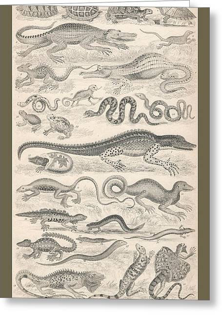 Lizard Illustration Greeting Cards - Reptiles Greeting Card by Captn Brown