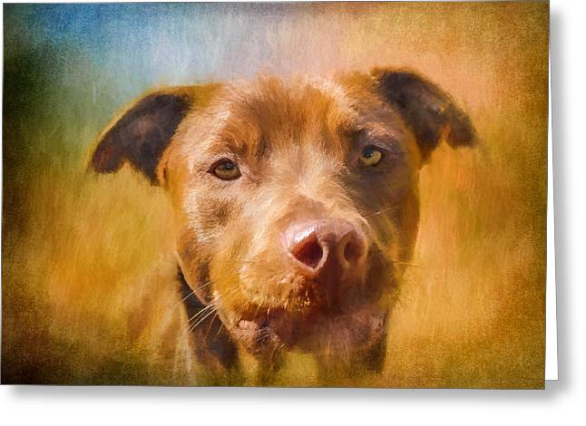 Puppies Photographs Greeting Cards - Rescued Chocolate Lab Portrait Greeting Card by Eleanor Abramson