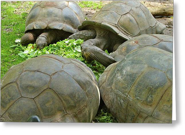 Tortoise Greeting Cards - Reservations For Five Greeting Card by Rick  Monyahan