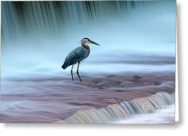 Recently Sold -  - Berry Greeting Cards - Resistance Greeting Card by James F Towne