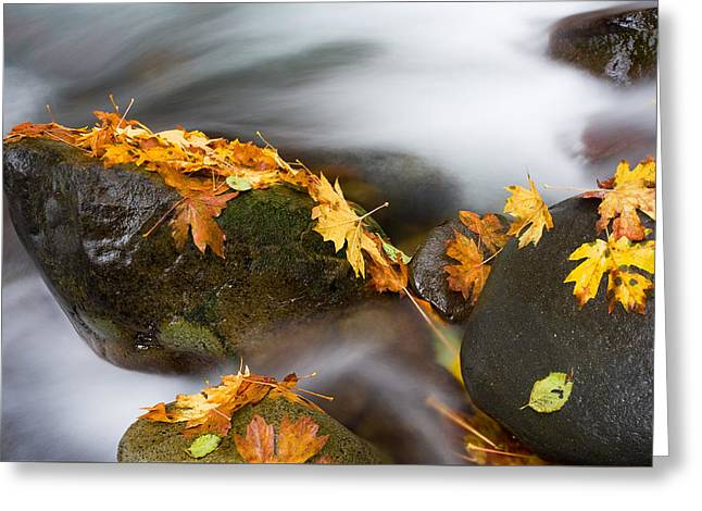 Autumn Greeting Cards - Respite Greeting Card by Mike  Dawson