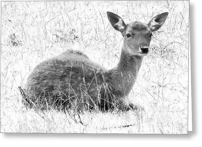Throw Down Greeting Cards - Resting Fawn In The Snow Greeting Card by Linsey Williams