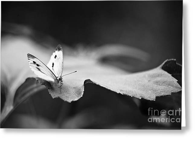 Buterfly Greeting Cards - Resting Greeting Card by Gabriela Insuratelu