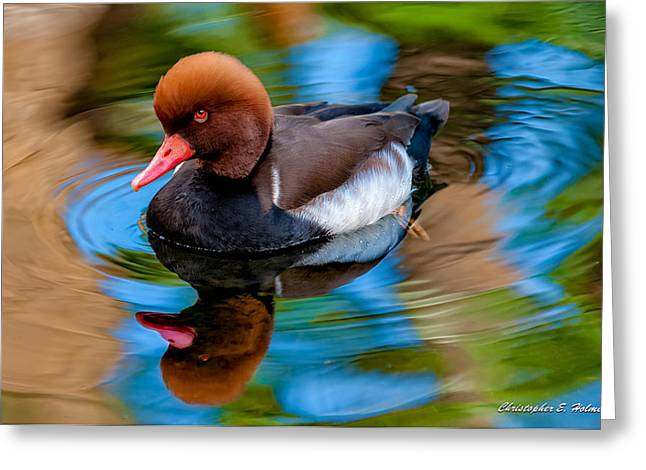Red Crest Greeting Cards - Resting In Pool Of Colors Greeting Card by Christopher Holmes