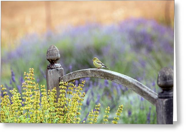 Purple Garden Greeting Cards - Resting in the Garden Greeting Card by Rebecca Cozart