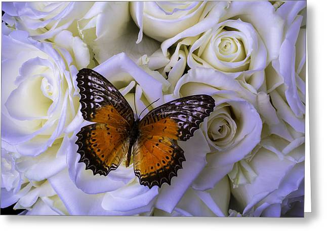 White Photographs Greeting Cards - Resting On White Roses Greeting Card by Garry Gay