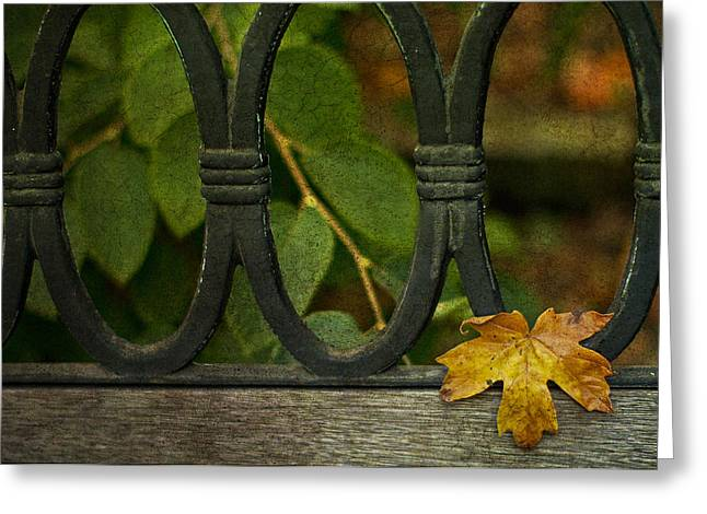 Yellow Leaves Greeting Cards - Resting Greeting Card by Rebecca Cozart