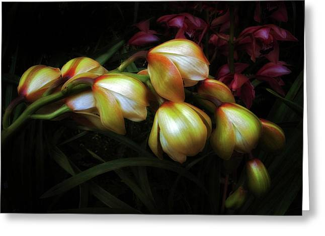 Orchid Petals Greeting Cards - Reticence Greeting Card by Jessica Jenney