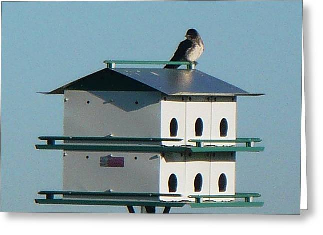 Jerry Browning Greeting Cards - Return of the Purple Martin Greeting Card by Jerry Browning