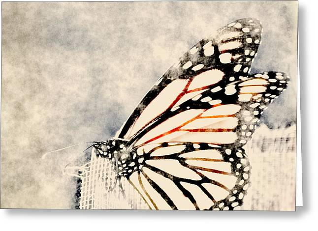 Reve De Papillon - 11a Greeting Card by Variance Collections