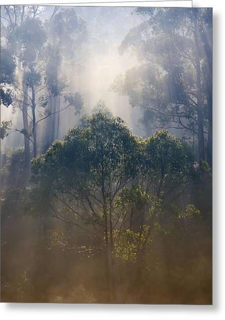 Crepuscular Rays Greeting Cards - Revealed Greeting Card by Mike  Dawson