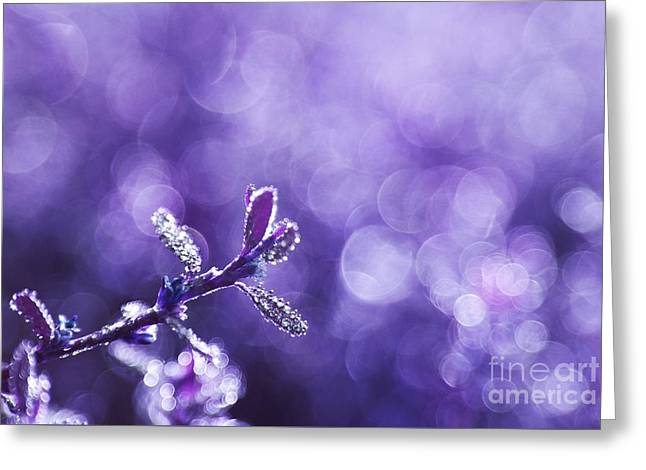 """""""aimelle Photography"""" Greeting Cards - Revival - Renaitre a la Vie Greeting Card by Aimelle"""