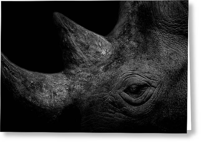 Rhinoceros Greeting Cards - Rhino Greeting Card by Bradley Rasmussen