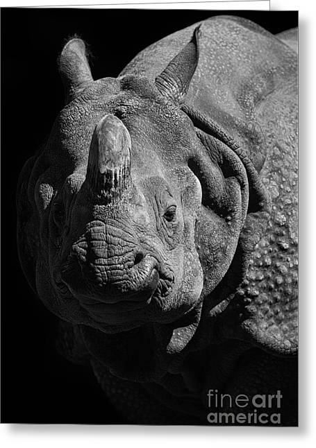 Rhinoceros Greeting Cards - Rhino Greeting Card by Marco Fischer