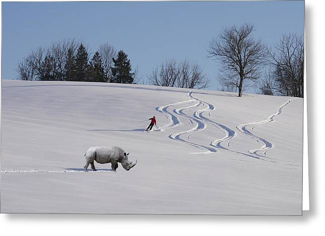 Rhinoceros Greeting Cards - Rhino On Piste Greeting Card by Richard Reeve