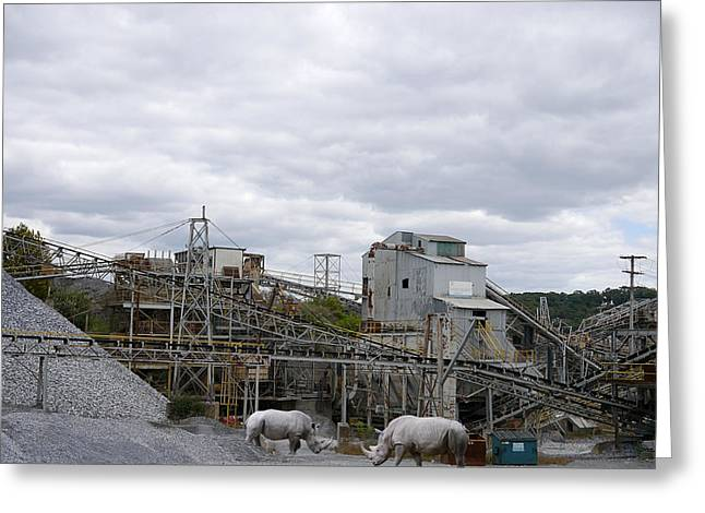 Rhinoceros Greeting Cards - Rhino Quarry - Break Time Greeting Card by Richard Reeve