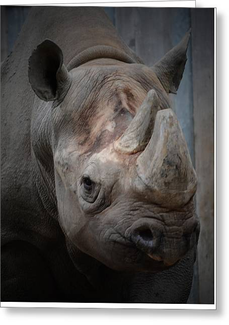 Rhinoceros Greeting Cards - Rhinoceros - Lincoln Park Zoo Greeting Card by Richard Andrews
