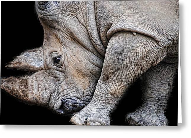 Rhinoceros Greeting Cards - Rhinoceros on Black Greeting Card by Cindy Boyd