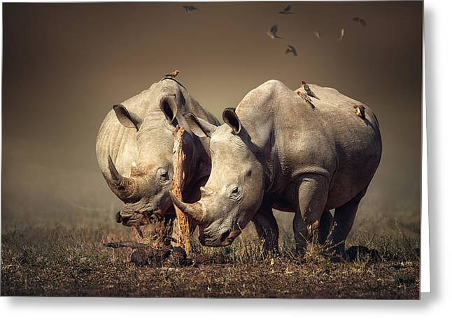 Burn Greeting Cards - Rhinos with birds Greeting Card by Johan Swanepoel
