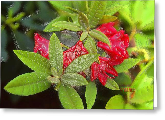 Rhodendron Greeting Cards - Rhodendron in 3D Greeting Card by Garland Johnson