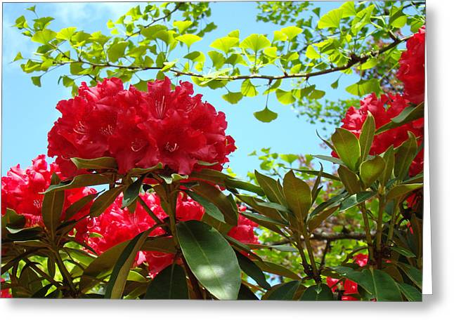 Rhodies Flowers Greeting Cards - Rhodies art prints Red Rhododendron Floral Garden Landscape Baslee Greeting Card by Baslee Troutman