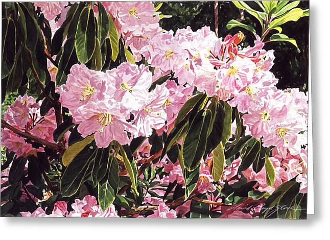 Most Greeting Cards - Rhodo Grove Greeting Card by David Lloyd Glover
