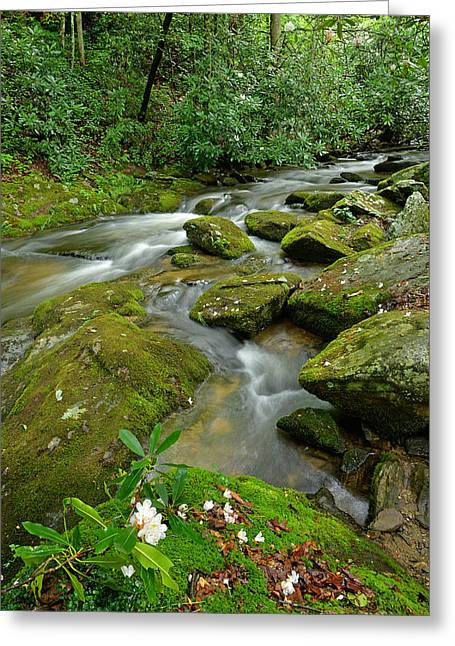 Water Flowing Greeting Cards - Rhododendron Blossom On Cold Springs Creek Greeting Card by Alan Lenk