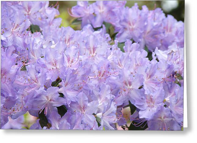 Rhodie Greeting Cards - Rhododendron Floral Flowers Lavender Purple prints Baslee Greeting Card by Baslee Troutman