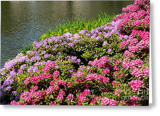 Rhododendron Or Azalea Luxuriant Park In Warsaw  Greeting Card by Arletta Cwalina