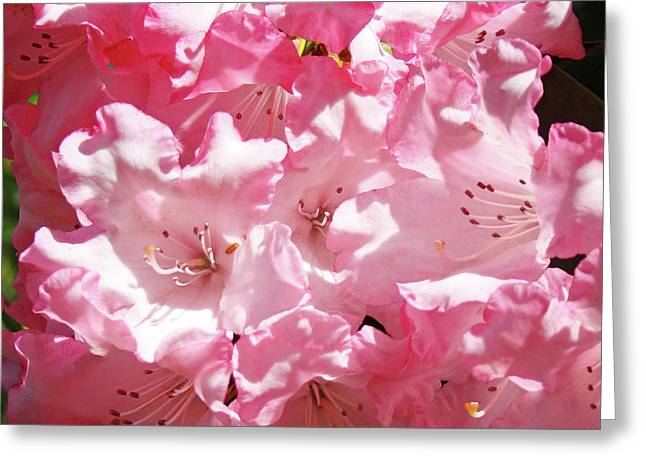 Rhododendrons Floral Art Prints Pink Rhodies Baslee Troutman Greeting Card by Baslee Troutman