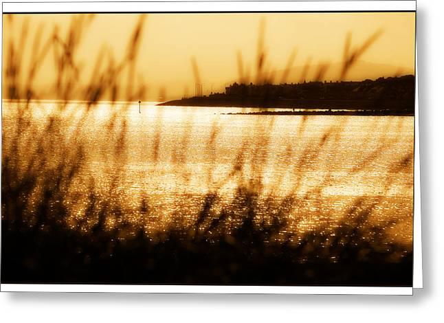 Rhos Point Viewed Through Beach Grass Greeting Card by Mal Bray