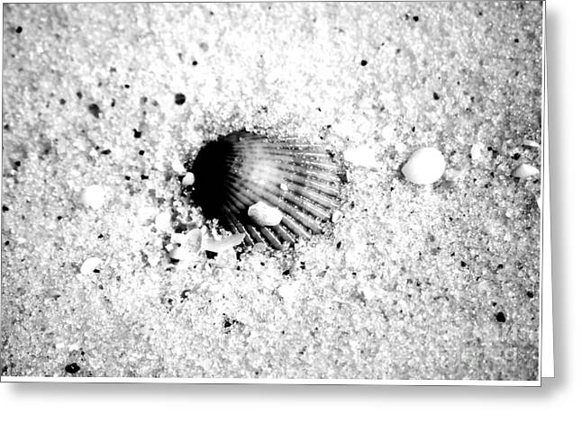 Caribbean Greeting Cards - Ribbed Sea Shell Macro Buried in Fine Wet Sand Black and White Digital Art Greeting Card by Shawn O