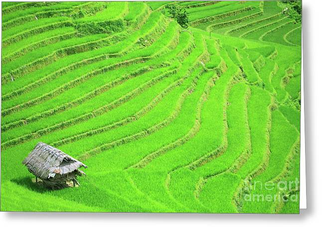 Haze Photographs Greeting Cards - Rice field terraces Greeting Card by MotHaiBaPhoto Prints