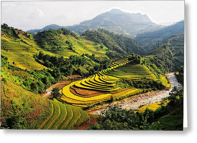 Local Food Digital Greeting Cards - Rice fields on terraced in Vietnam Greeting Card by Phuong Duy Nguyen