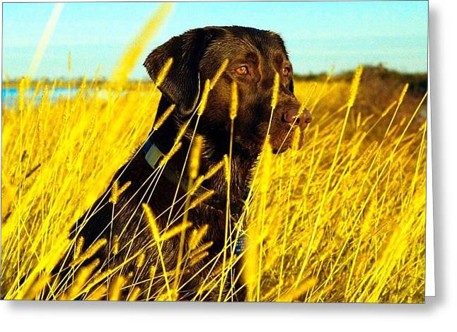 Chocolate Lab Greeting Cards - Rice Levee Greeting Card by Stebin Horne