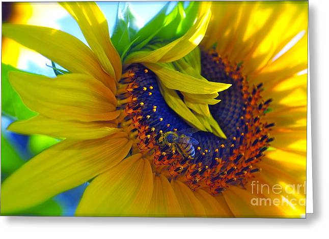 Yellow Sunflower Greeting Cards - Rich in Pollen Greeting Card by Gwyn Newcombe