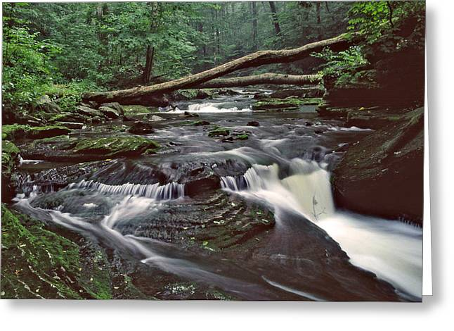 Lush Green Digital Greeting Cards - Ricketts Glenn falls 007 Greeting Card by Scott McAllister