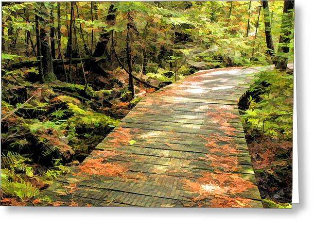 Door County Greeting Cards - Ridges Sanctuary Boardwalk Greeting Card by Christopher Arndt
