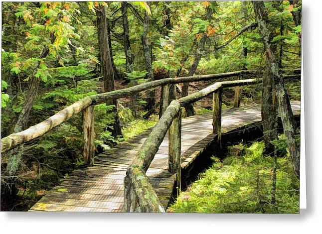 Door County Greeting Cards - Ridges Sanctuary Curve Greeting Card by Christopher Arndt