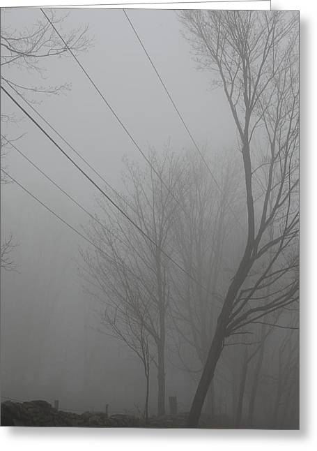 Telephone Wires Greeting Cards - Right Thru The Trees Greeting Card by Karol  Livote