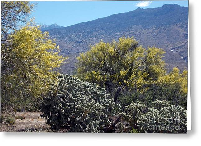 Rincon Greeting Cards - Rincon Radiance Greeting Card by Jerry Bokowski