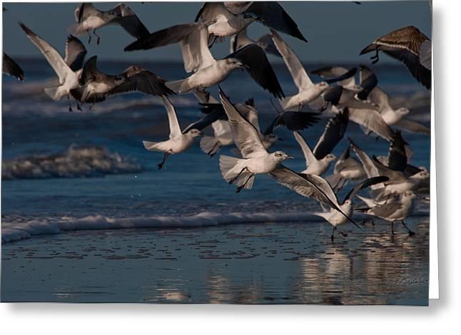 Ring-billed Gull Greeting Cards - Ring-Billed Gulls at Kiawah Island Greeting Card by Melissa Wyatt