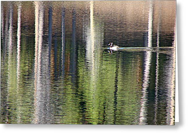 Sprague Greeting Cards - Ring Neck Duck RMNP Greeting Card by Diana Douglass