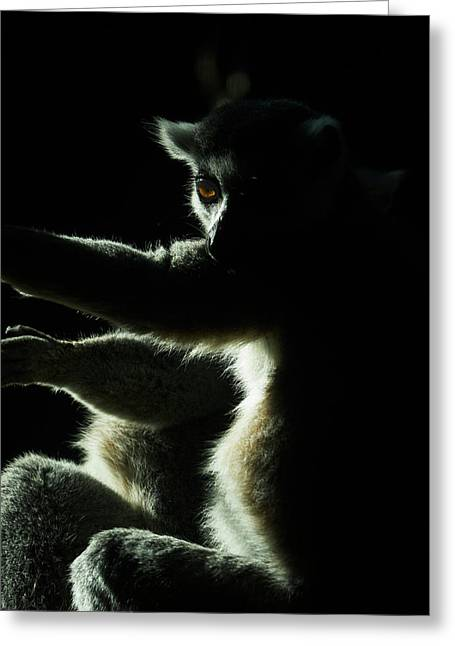 Ring Tailed Lemur Greeting Card by Steven Ralser