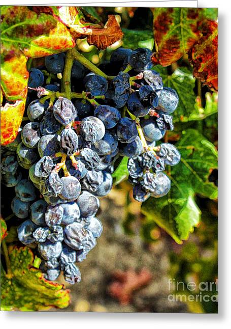 Grape Vineyard Greeting Cards - Ripe for the Picking Greeting Card by Stefan H Unger