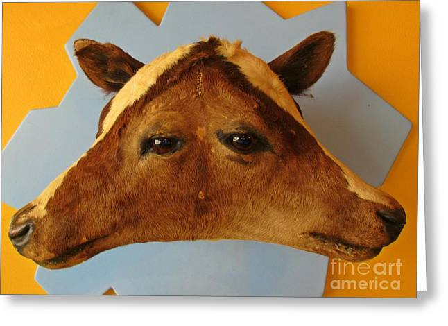 Believe Sculptures Greeting Cards - Ripleys Cow Head Greeting Card by John Malone